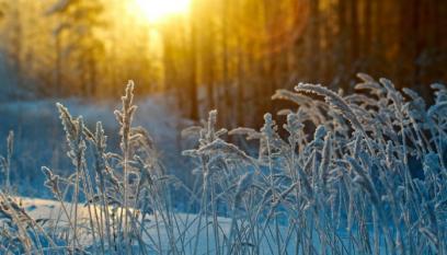 Winters Crop